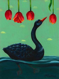 Black Swan Spring