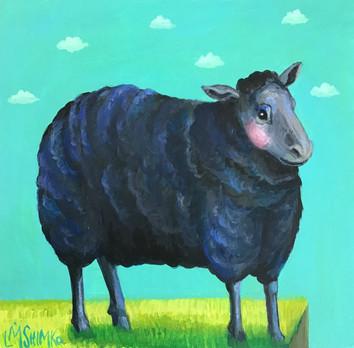 Black Sheep VI