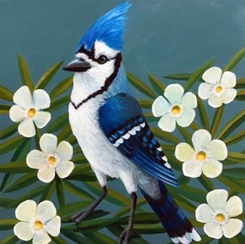 Blue Jay Oleander
