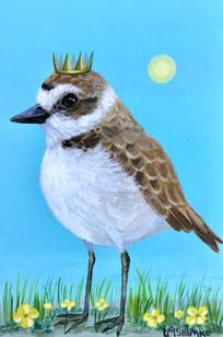 Snowy Plover King II