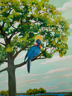 Passenger Pigeon Canopy