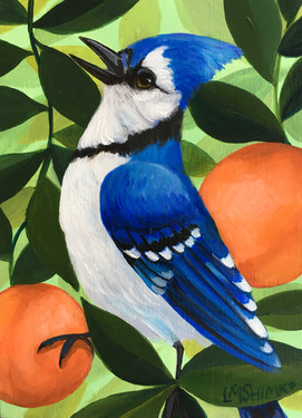Blue Jay Peach II