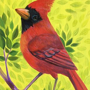 Spring Green Cardinal
