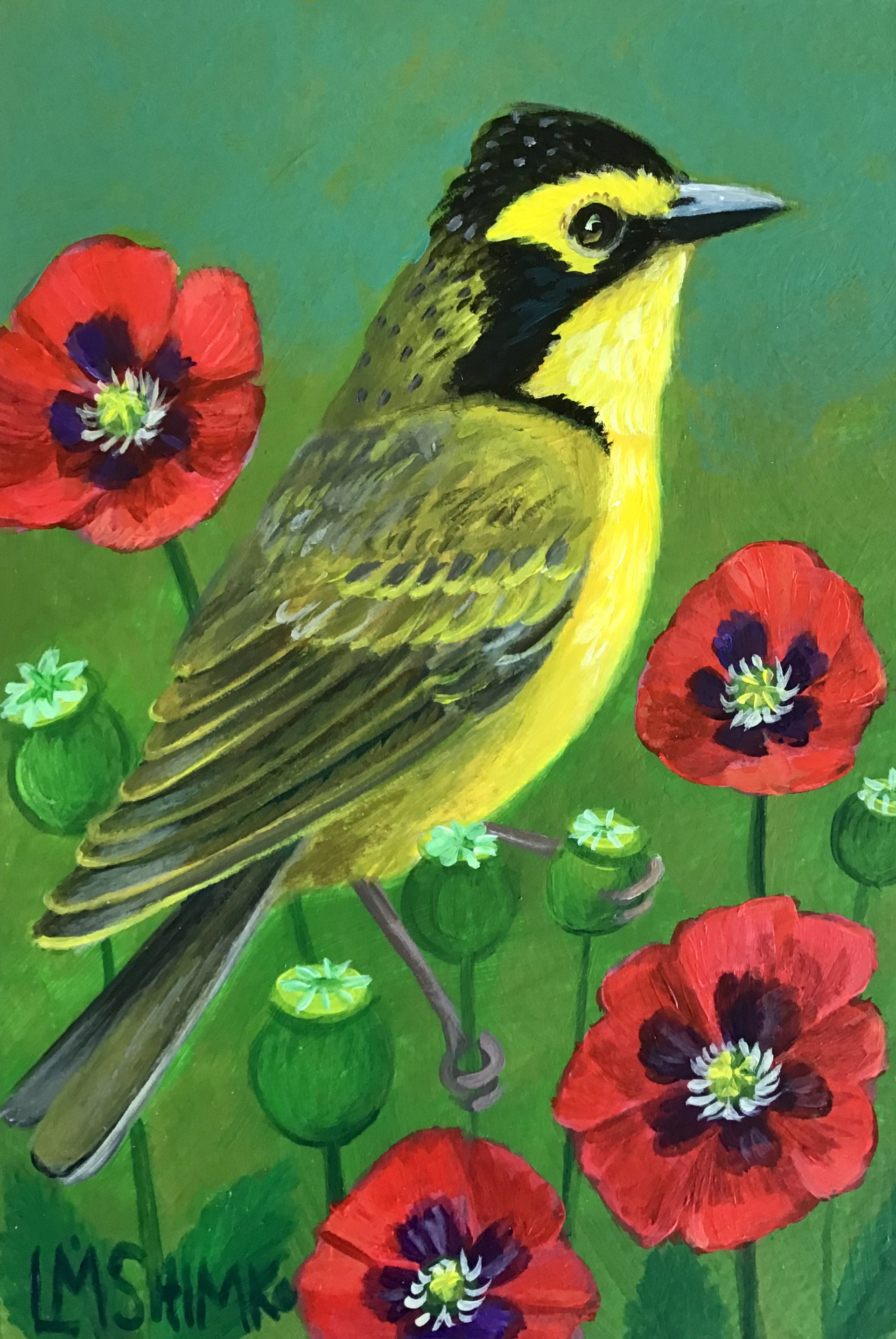 Kentucky Warbler Poppies