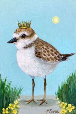 Snowy Plover King I