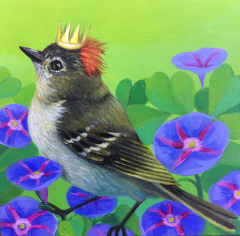 Ruby-crowned Kinglet Morning Glory
