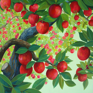 Apple Canopy 33