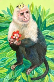 Royal Capuchin Monkey