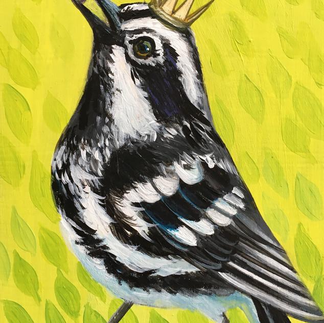 Spring Green Warbler