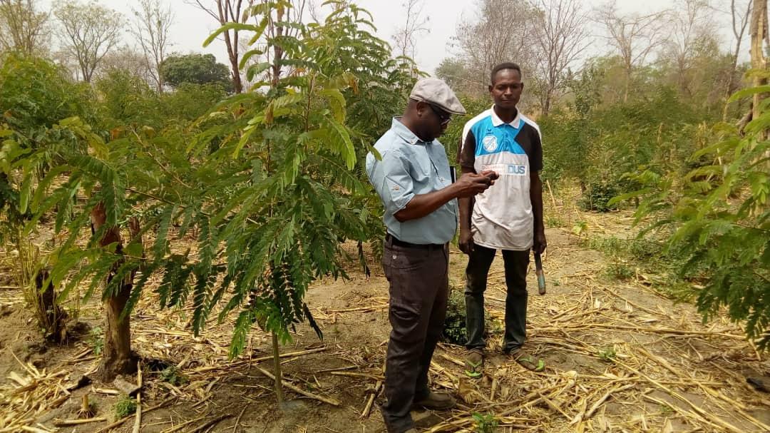 GhanaCharcoalPlantation.jpg