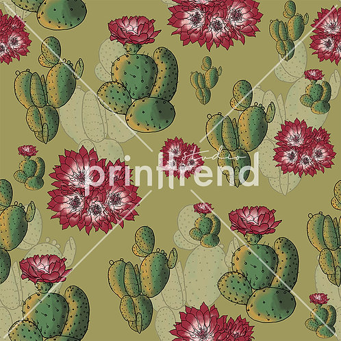 Cacti with flowers - Exclusive PSD