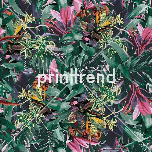 Rainforest print - Standard JPEG