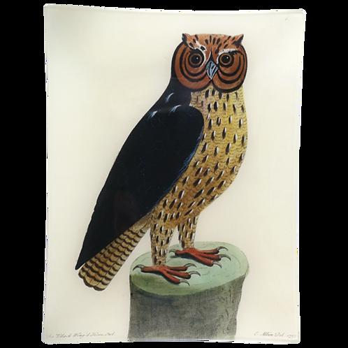 """John Derian - Horned Owl 10"""" x 13"""" Plate"""