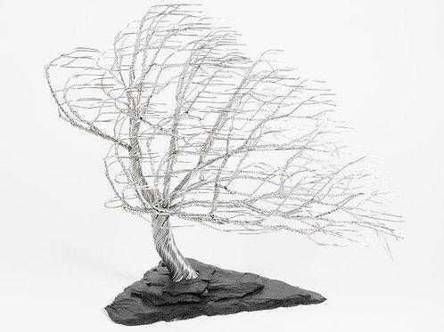 Windblown Tree (Large)
