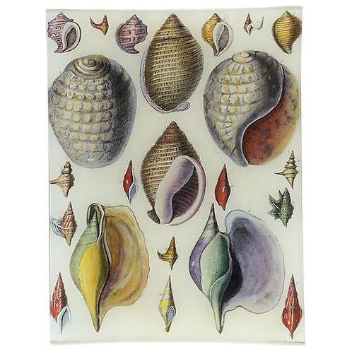 "John Derian - ""Captain Brown Shells"" 8"" x 10.5""Tray"
