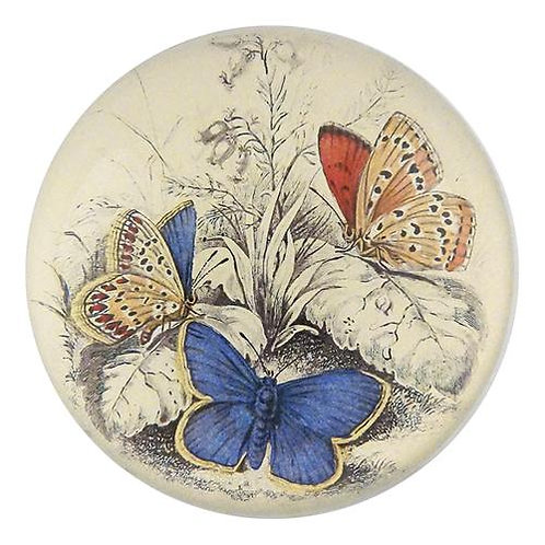 John Derian - Copper & Common Blue Butterfly Dome Paperweight