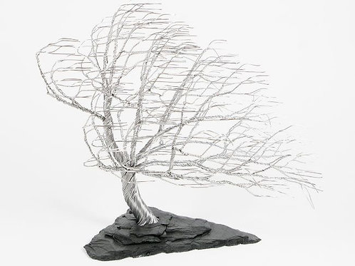 Windblown Tree (Small)