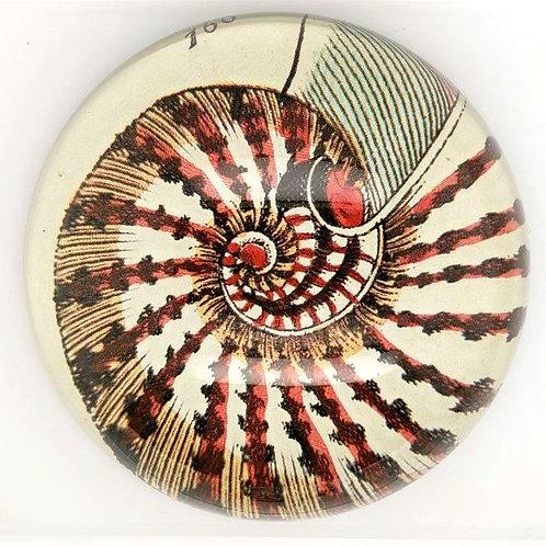 John Derian - Dome Paperweight - Nautilus