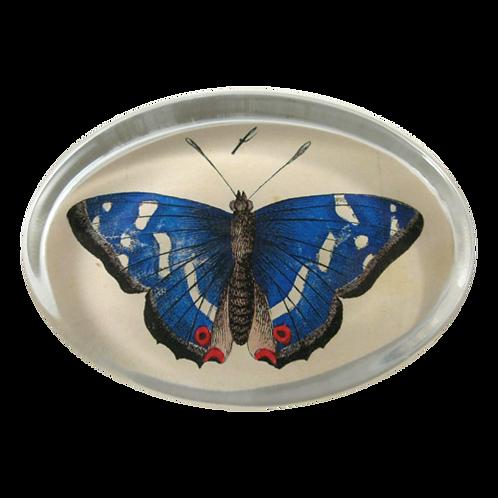 John Derian - Oval Blue Butterfly Paperweight