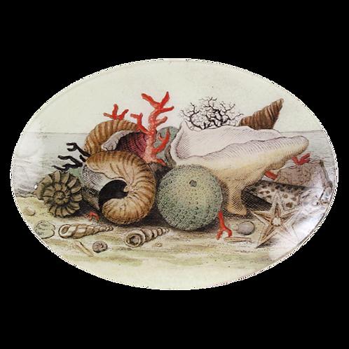 "John Derian - Shells, Circa 1755 - 7"" x 10"" Oval"