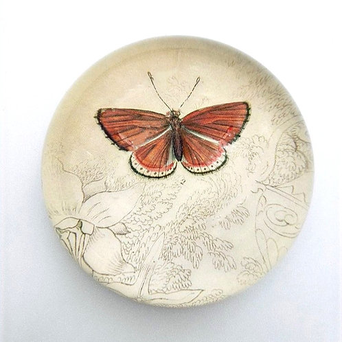 John Derian - Coral Butterfly Dome Paperweight