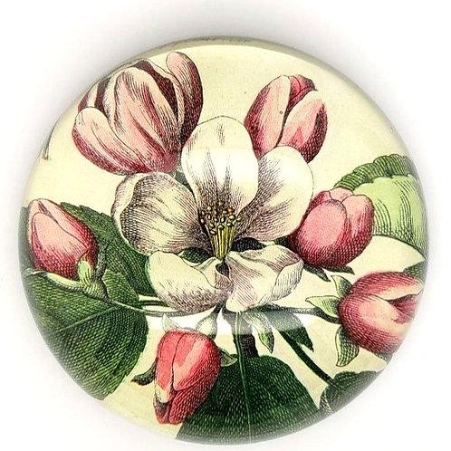 John Derian - Dome Paperweight - Beach Rose