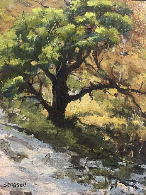 "Philip Bergson - ""Scrub Pine"" - Painting"