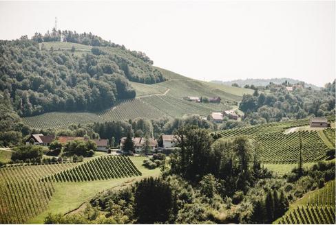 Weingut Lackner Tinnacher