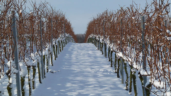 40-appenheim-weinberg-winter.jpg
