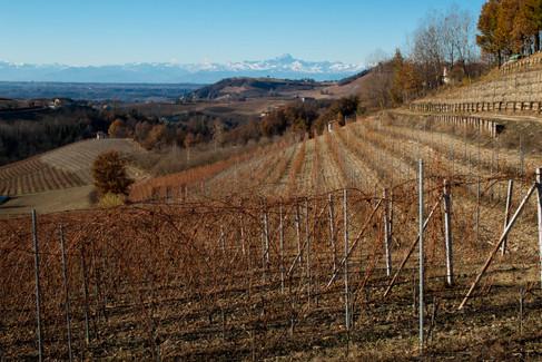 Baccà Monforte vigne e Monviso