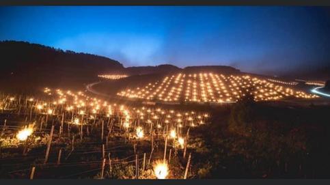 April 2021 frost og fakler vinmarkene