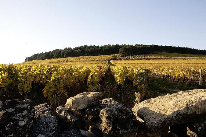 Winemoods