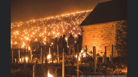 April 2021 Fakler i vinmarkene