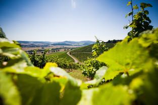 Vinmark i Bad Sobernheim
