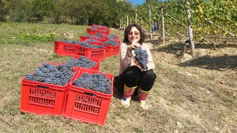 Silvia i vinmarken