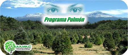 PROGRAMA PULMON.JPEG