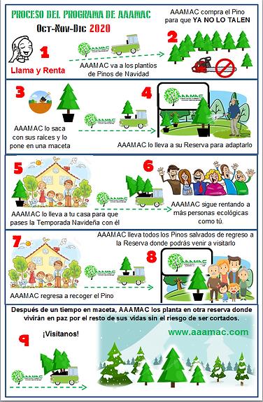 infografia lamina .png