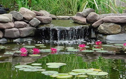 Waterfall and Lily Pads