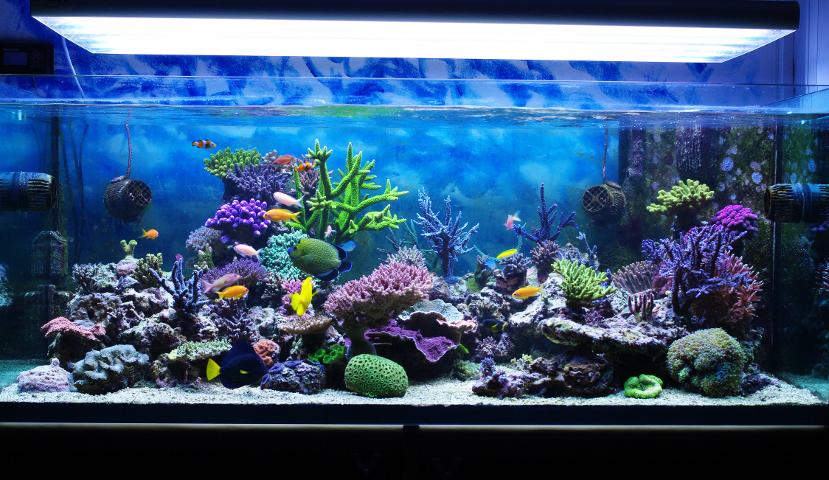 aquarium-010