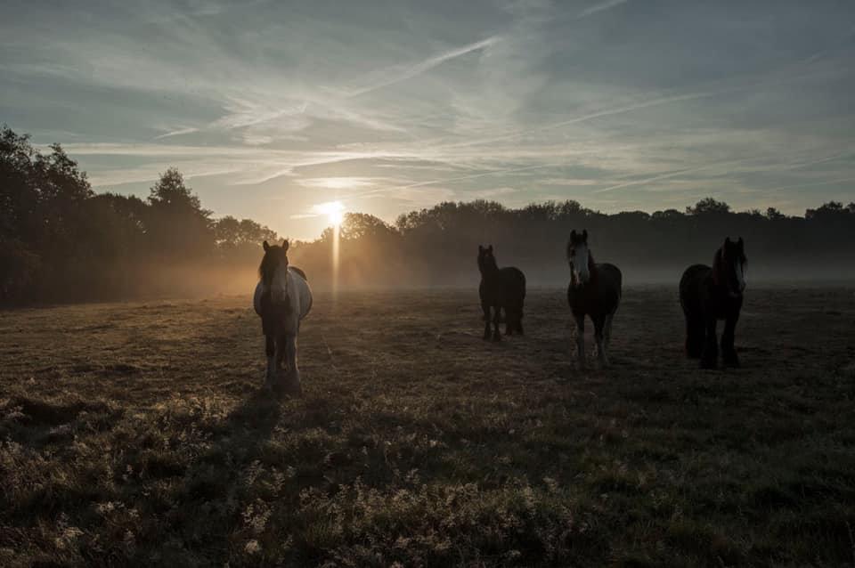 Kingsmead field at sunrise.jpg
