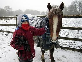 horse+handling.jpg