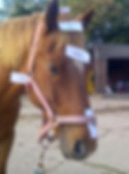 Tandridge-20120922-00485.jpg