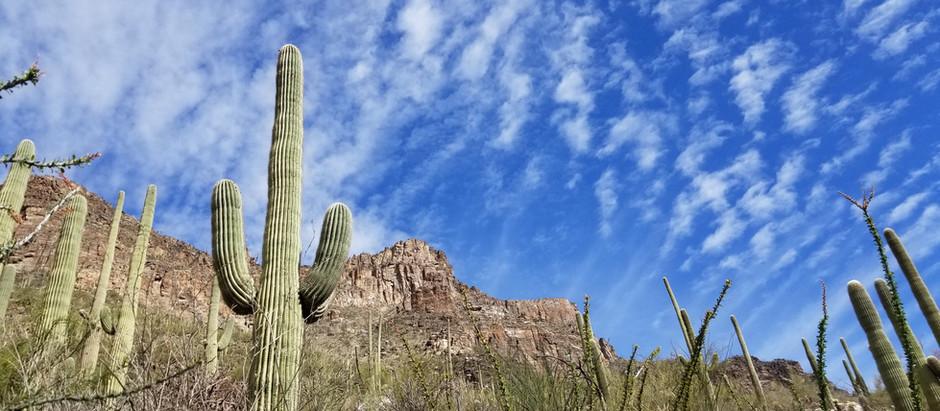 Arizona Wow!