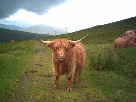 West Highland Way and more...