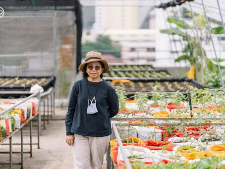 Upcycling Food Waste to Grow Organic Vegetables - Bangkok Rooftop Farming