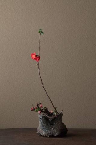 Plant - Zen