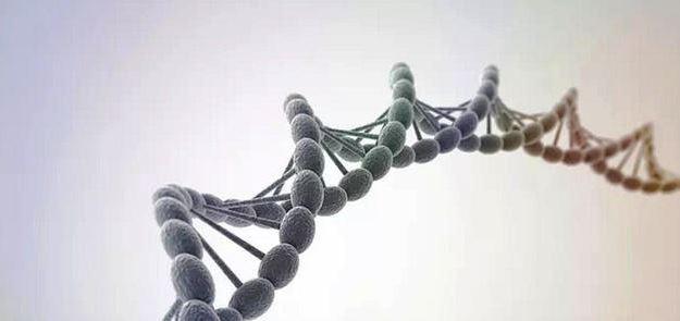 Telomeres, Longevity, & Sleep