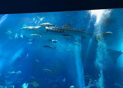 美ら海水族館 (2).jpg
