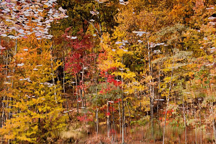 fall colors reflected in water at Amicalola Falls