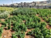 ارض للبيع 4دونم مسورة ومشجرة في منطقة ابوصياح اتوستراد الزرقاء